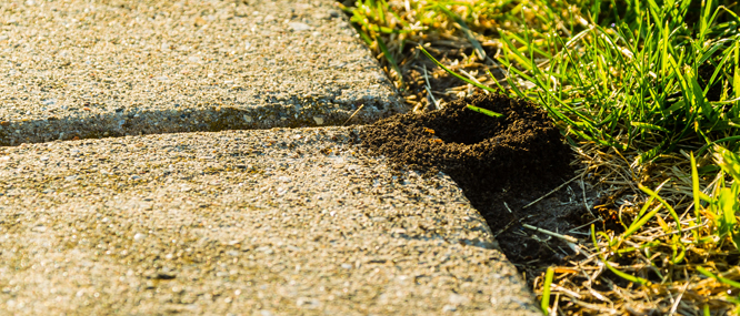 Lawn treatment: ant control